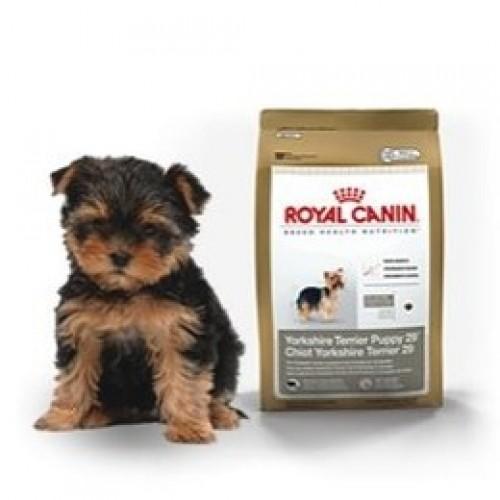 royal canin yorkshire terrier junior 500gr. Black Bedroom Furniture Sets. Home Design Ideas